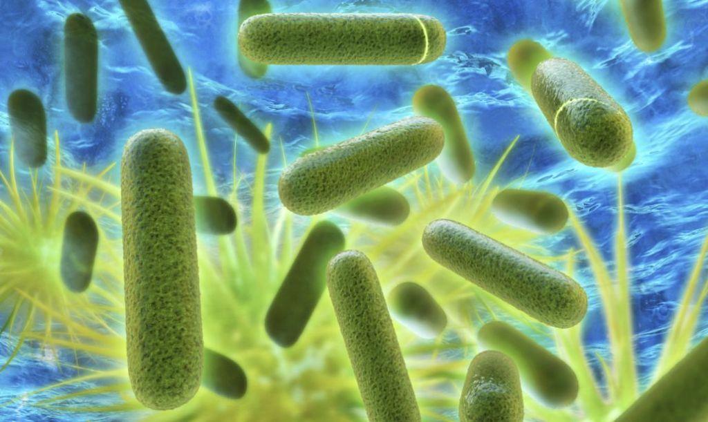 An image of Legionella